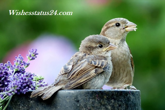 Happy World Sparrow Day 2020, Wishes, Message, Best Status, Significance, Slogans